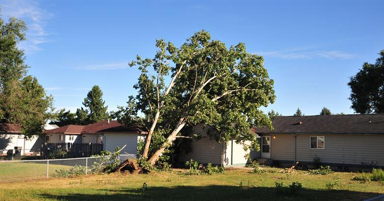 Dead Tree Removal Laws in PA